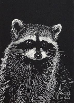 Raccoon Drawing - Little Bandit by Bob Williams