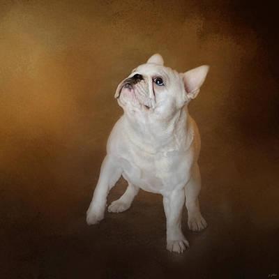 Bulldog Photograph - Little Beggar - White French Bulldog by Jai Johnson