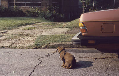 Little Brown Dog Print by John Hines
