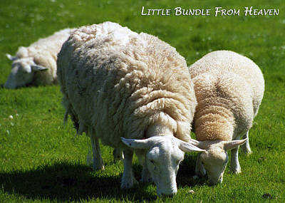 Little Bundle From Heaven Print by Dawn Currie