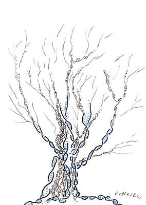Ink Drawing Drawing - Little Dna Tree by Regina Valluzzi