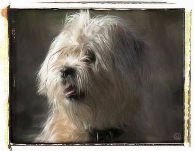 Puppy Digital Art - Little Doggie by Gun Legler