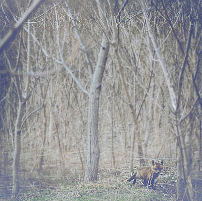 Winter-landscape Photograph - Little Fox In The Woods 2 by Carrie Ann Grippo-Pike