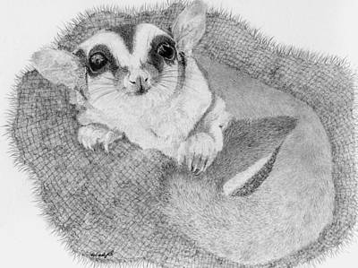 Marsupial Drawing - Little Lucy Lu by Wendy Brunell