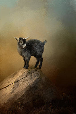 Goat Photograph - Little Rock Climber by Jai Johnson