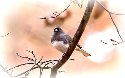 Little Snowbird - Junco 3738-002 Print by Travis Truelove