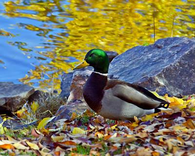 Duck Mixed Media - Littleton Pond 6 Closeup by Angelina Vick