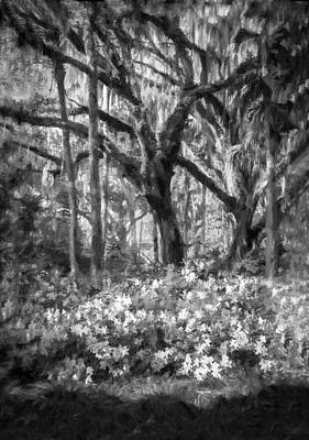 Live Oaks And Azaleas Painted Bw Print by Rich Franco