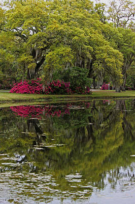 Live Oaks In Reflection II Original by Suzanne Gaff