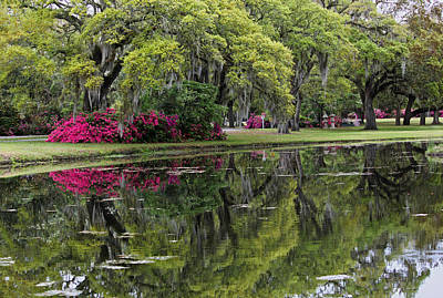 Live Oaks In Reflection Original by Suzanne Gaff