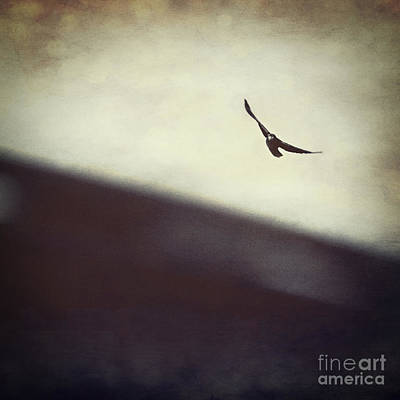 Blackbird Photograph - Living High by Trish Mistric