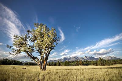 Sage Brush Photograph - Livingston Range // Glacier National Park by Nicholas Parker