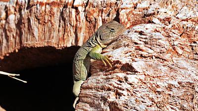 Lizard In A Gypsum Bubble Original by Santosh Seshadri