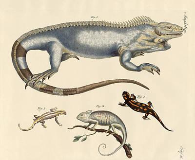 Salamanders Drawing - Lizards by Splendid Art Prints