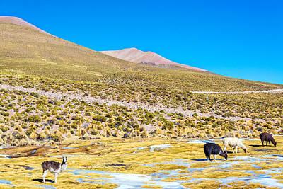 Llama Photograph - Llama Landscape by Jess Kraft