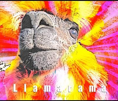 Llama Photograph - Llamarama by WDM Gallery