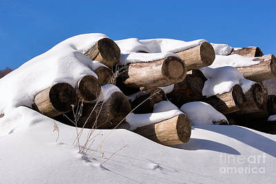 Log Pile In A Snow Drift In Winter Print by Louise Heusinkveld