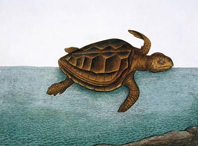 Loggerhead Turtle Print by Natural History Museum, London