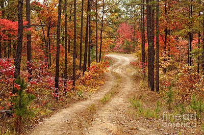 Bow Lake Photograph - Logging Road In The Ouachita National Forest - Beaver's Bend State Park - Poteau - Oklahoma Arkansas by Silvio Ligutti