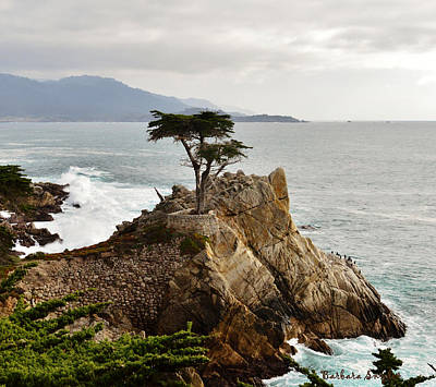 Lone Cypress Detail Print by Barbara Snyder
