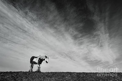 Lone Horse Print by Julian Eales