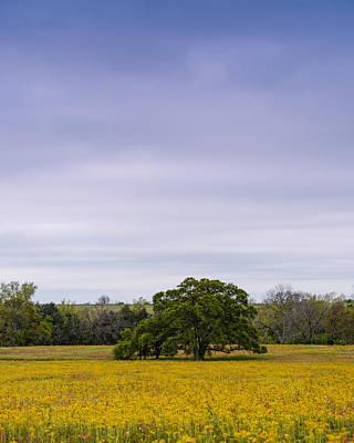 Lone Oak In A Field Of Phlox - Industry Texas Print by Silvio Ligutti