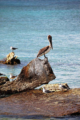 Lone Pelican Photograph - Lone Pelican by Charrie Shockey