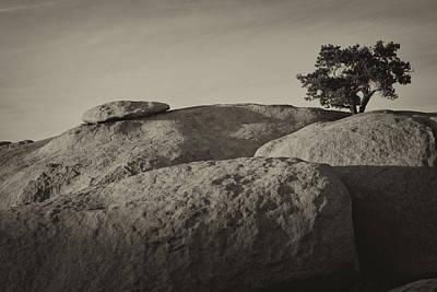Tree Photograph - Lone Pine Power by Alan Kepler