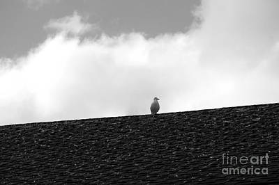 Lone Seagull On A Rooftop Print by John  Mitchell