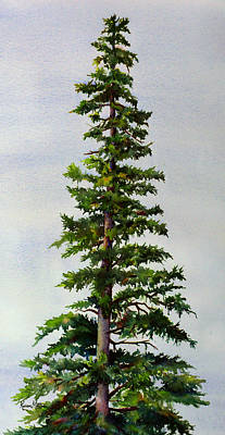 Impressionistic Painting - Lone Spruce by Karen Mattson