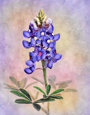 Flower Gardens Photograph - Lone Star Bluebonnet by David and Carol Kelly