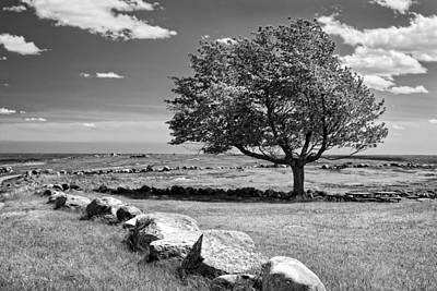 Blueberry Digital Art - Lone Tree In Maine Blueberry Field by Keith Webber Jr