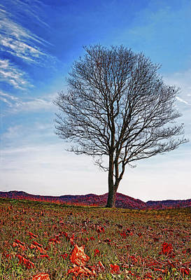 Alone Photograph - Lone Tree by Marcia Colelli