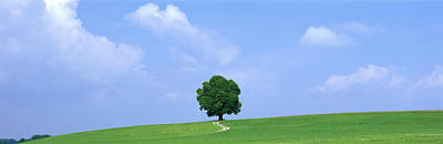 Lone Tree On Hilltop Salzkammergut Print by Panoramic Images