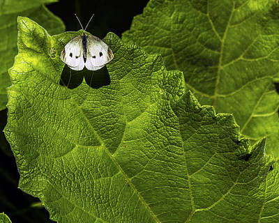 Lonely On A Leaf Print by Tim Buisman