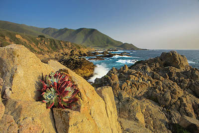 Of Big Sur Beach Photograph - Lonely Rock Plant by Tom Norring