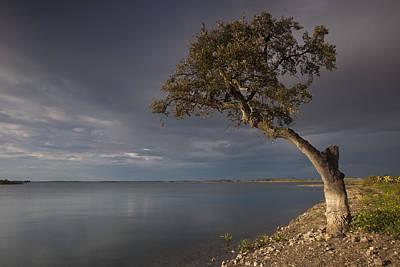 Alqueva Photograph - Lonely Tree In Alqueva by Ruben Vicente