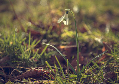 Snowdrop Photograph - Lonesome by Chris Fletcher