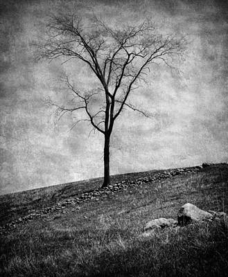 Lonesome Tree Print by Mary Lane