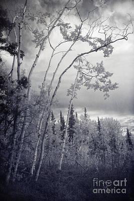 Lonesome Woods Print by Priska Wettstein