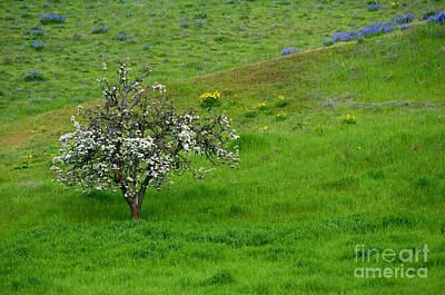 Cherry Trees Photograph - Long Forgotten by Mike  Dawson