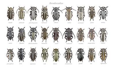 Longhorn Beetles Print by F. Martinez Clavel