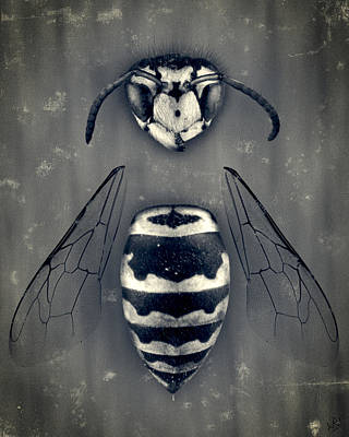 Bee Photograph - Looking Down Upon Myself by Adam Romanowicz