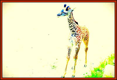 Looking For Mama Print by Kathy Barney