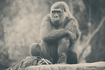 Captivity Photograph - Looking So Sad by Laurie Search