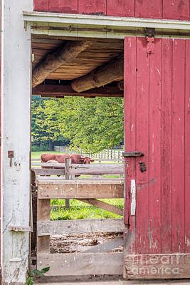 Looking Through The Barn Print by Patrick Shupert