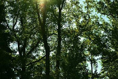Nature Photograph - Looking Up From Front Entrance by Bob Gross