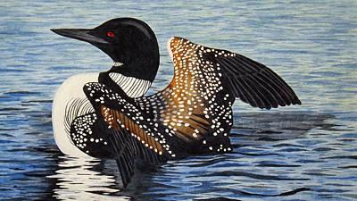 Loon Painting - Loon In Flight by Brenda Brown
