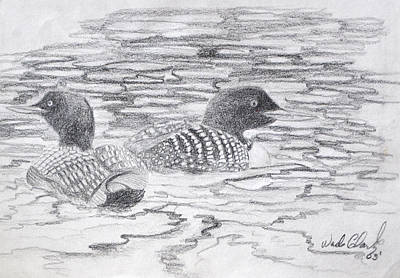 Loon Sketch Print by Wade Clark