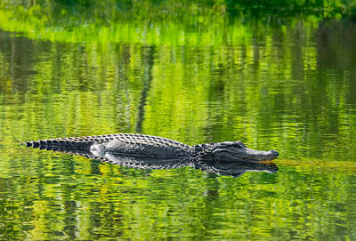 Alligator Bayou Photograph - Lord Of The Green by Steve Harrington